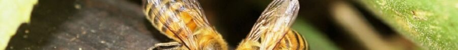 ¡Fumigación DSJ … les hace conocer más de los insectos!