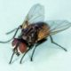 Estas siendo afectado por plagas de moscos. Fumigación dsj tiene las acciones de como eliminarlas.