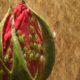 FUMIGACION DSJ hace que su jardín sea el más lindo; libre de plagas y enfermedades.