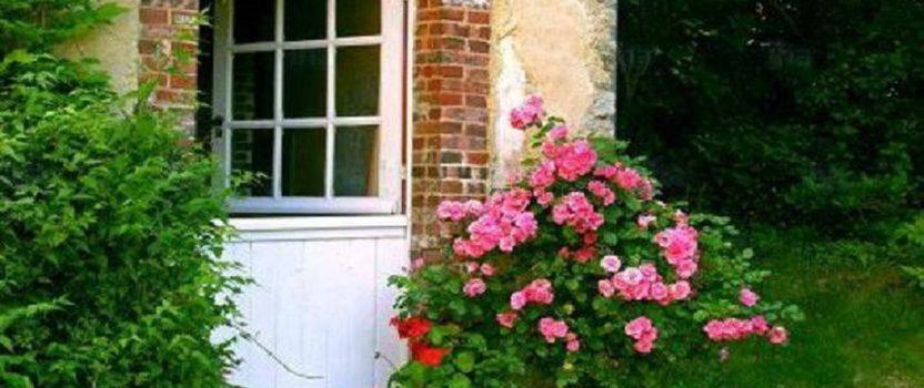 Fumigación DSJ. Elimina las malezas de tu jardín.