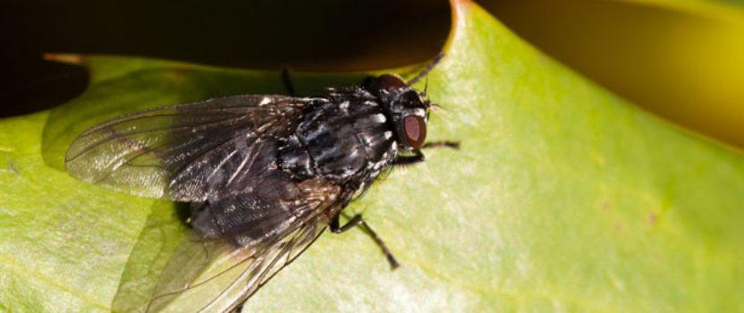 FUMIGACION DSJ. Servicio de control de insectos voladores.