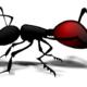 Las Hormigas. Aspectos importantes para su control.