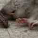 Fumigación DSJ. Expertos en control de insectos rastreros y voladores, ratas y ratones.