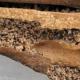Infestación por termitas de madera seca.